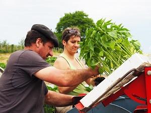 Planter le piment dEspelette chez Bipertegia